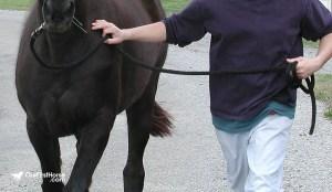 Taking a walking horse walk