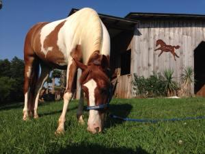 Our Horse Cash
