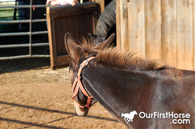 Jazzy the mule looking at her new horse family