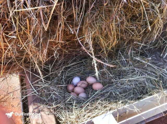 Eggs in the hay