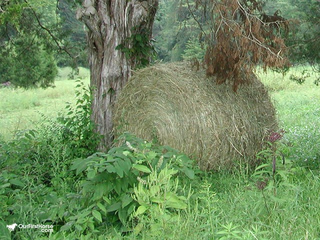 Round bale of hay