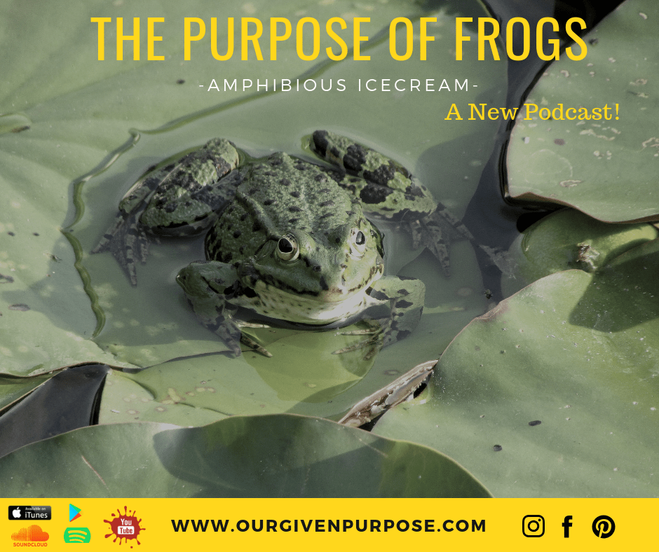 The Purpose of Frogs?