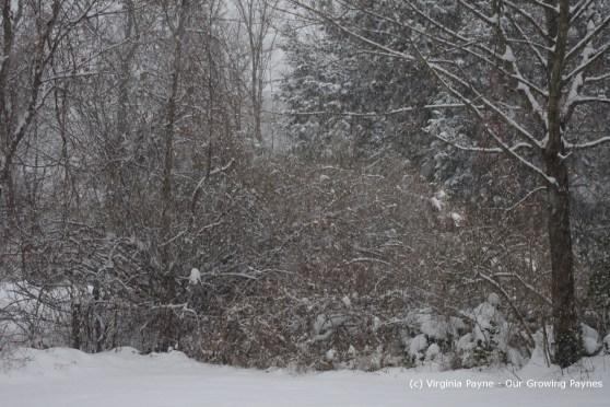 Winter 1 2013