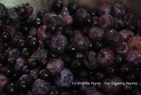 Black currant jam 2 2015