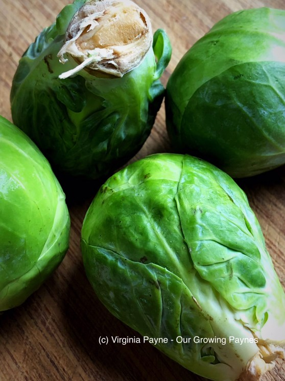 Brussel sprouts sliders 1 2018