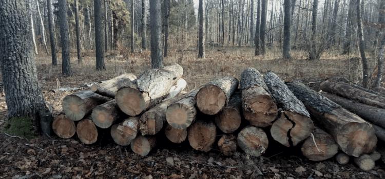 Санітарні рубки та ліквідація захаращення. Експерти WWF про протиріччя в управлінні лісами природно-заповідного фонду