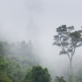 Понад 43 мільйони гектарів лісу втрачено у тропіках і субтропіках за останні 13 років — звіт WWF