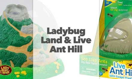 Live Ladybug Land and Live Ant Hill
