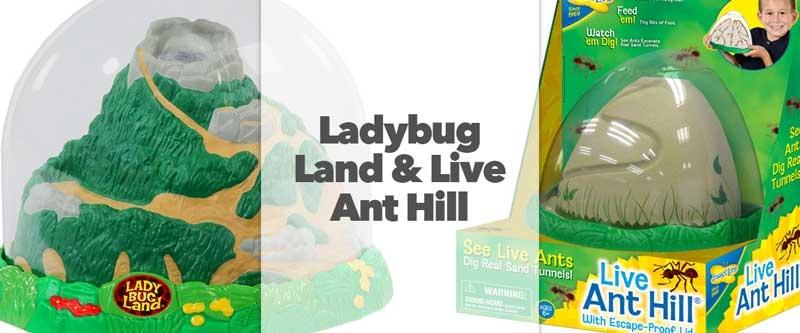 Live Ladybug Land and Live Ant Hill