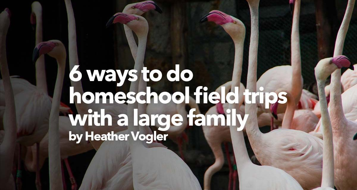 6 ways to do a homeschool field trip with a large family