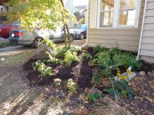 south front bed after 10/17/15 weekend