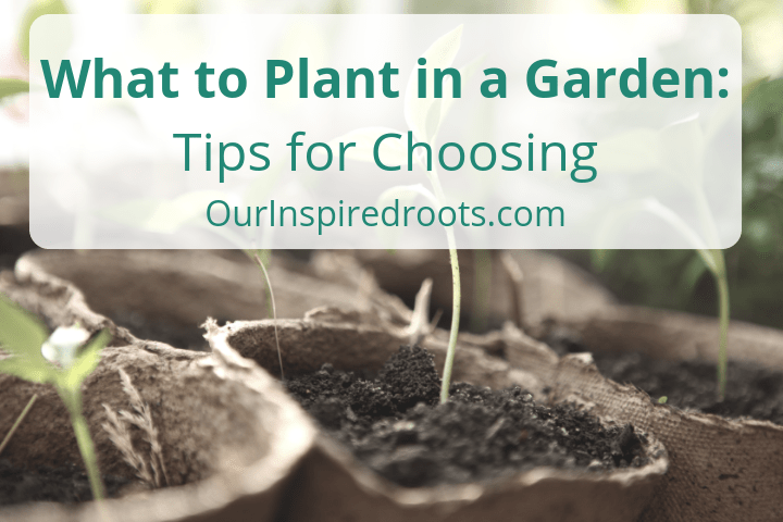 What to Plant in a Garden: How to Choose What to Grow