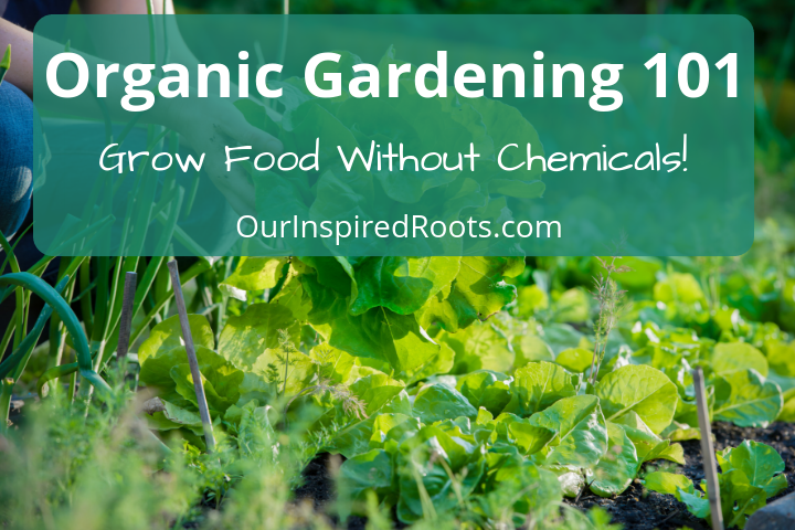 Organic Gardening 101: How to Get Started Growing Your Own Food!