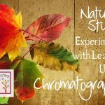 Use markers and real leaves to experiment with chromatography and predict the color of autumn leaves. You'll want to do the experiment while tree leaves are still green!