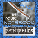 Nature in Your Notebook Free Winter Printables