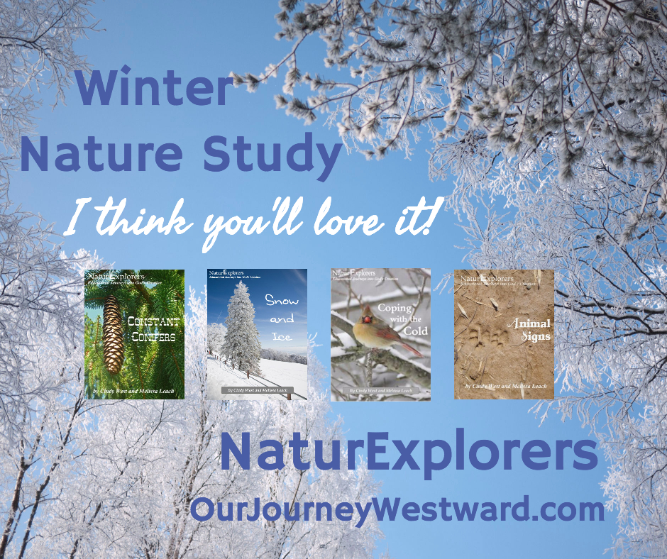 Winter NaturExplorers 940x788 (Facebook)