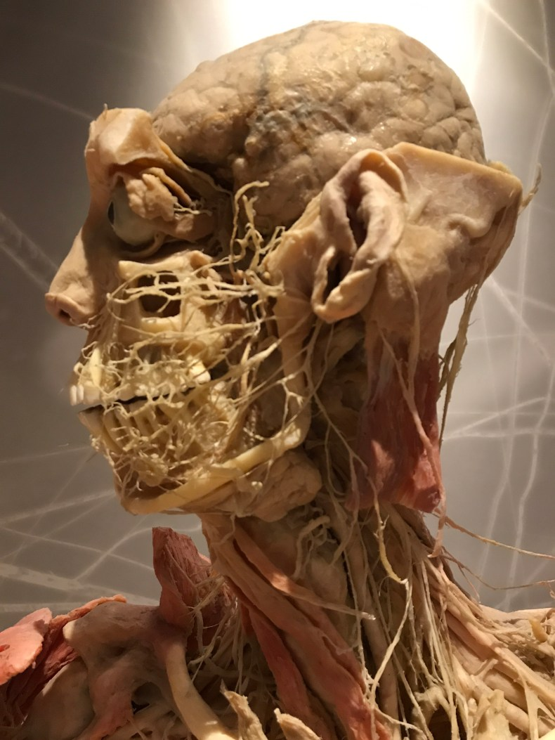Bodies: Las Vegas Exhibit