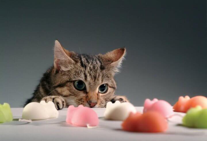 Diet untuk kucing