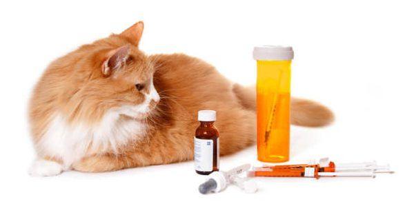 Diagnosis dilakukan oleh dokter hewan yang meresepkan pengobatan