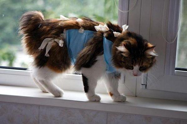 Kangker payudara pada kucing