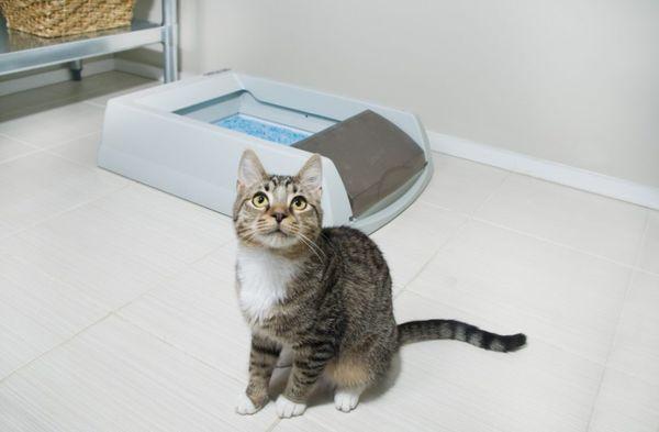 Kucing perlu pergi ke toilet secara teratur