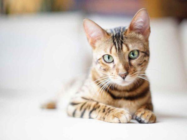 Kucing mungkin berhenti pergi ke toilet karena nutrisi yang tidak tepat