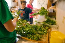 Young helpers prepare herbs for drying