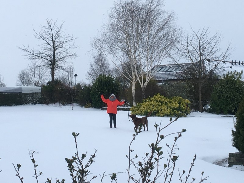 Ourleapoffaith's Shell and Fred Dog in the snow at Old Oaks Touring Park Glastonbury
