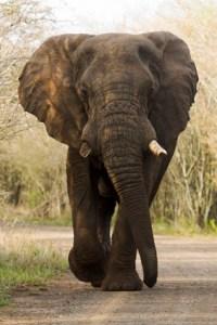 Elephants have a sense of humour!