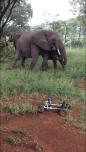 Elephants in our garden