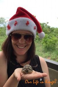 leopard tortoise hatchling