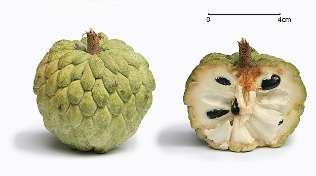 Custard Apple Taiwan