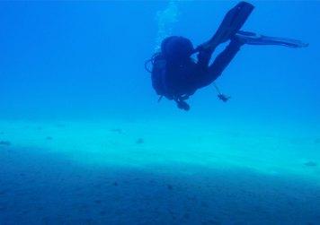 Plongée avec les grondins volants