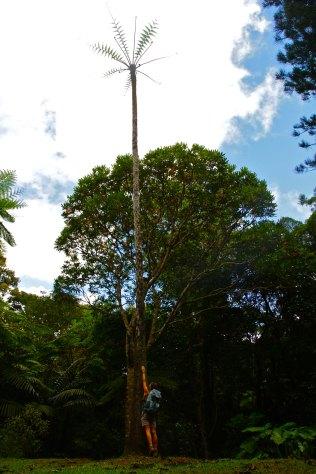Les fameuses fougères arborescentes hautes de plusieurs mètres