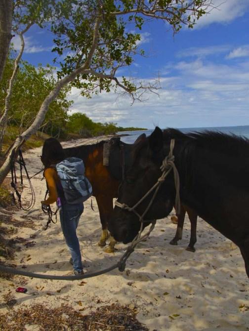 Attacher les chevaux avant la pause repas !