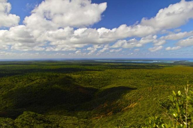 Côté terre, forêt de Pins jusqu'à l'autre bout de l'île