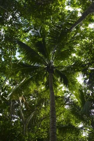 Traversé de la forêt pour atteindre la Piscine naturelle