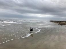 Tipper loves the beach