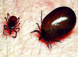 स्क्रब टायफस , Nagpur Under Grips of Scrub Typhus
