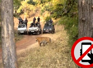 Mobile ban in Tadoba National Park from December 1