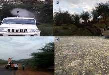Locust control operations