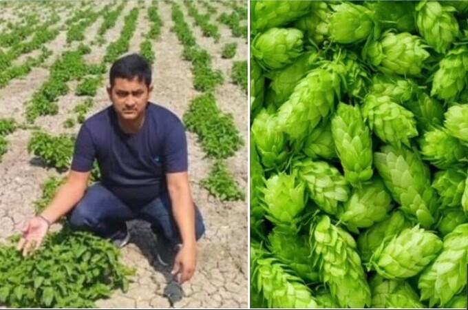 Remember Bihar's ₹ 1 Lakh Per kg Crop? Report Says It Was A Big Lie