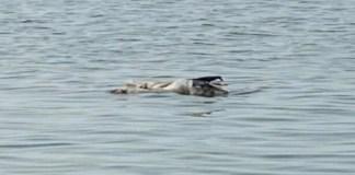 Bodies in PPE kits found floating in Ganga near Gulabi Ghat in Patna