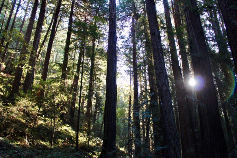 Quick tips to make the most of a Muir Woods day trip from San Francisco. #familytravel #sanfrancisco #california // Family Travel | Travel with Kids | SF Bay Area | California Road Trip | Hiking Trails | Outdoor Adventures | US Travel | USA | United States | Northern CA