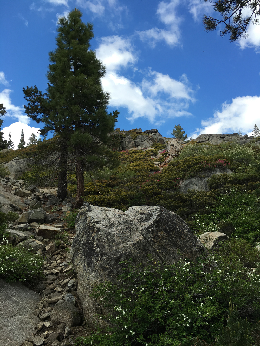 Granite Boulder in the Mountains // OurNextLife.com -- Early Retirement, Mountain Living, Adventure