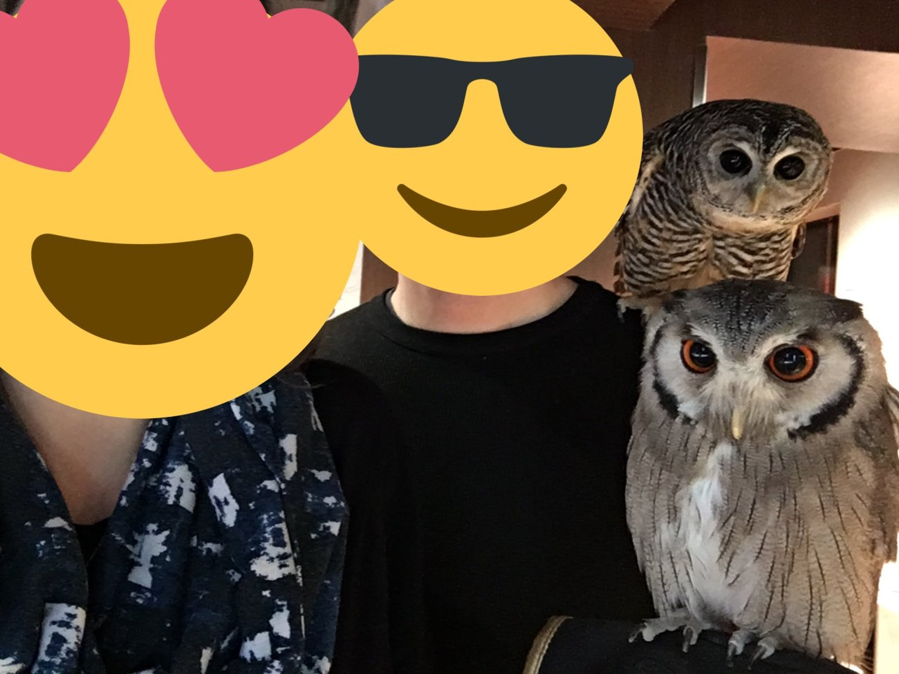Ms. ONL and Mr. ONL at an owl cafe in Tokyo, Japan