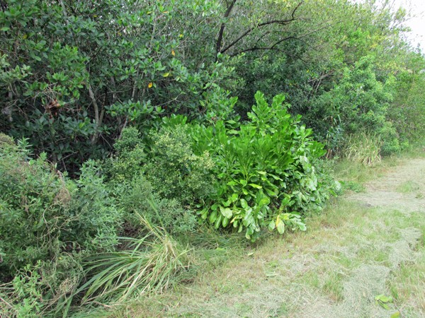Boo … Another Invasive Plant … – Oslo Riverfront ...