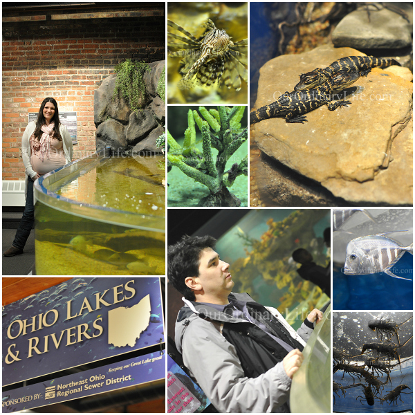 Checking out the marine oceand and fresh water life at Great Cleveland Aquarium. Great place for families, but we had fun just us.