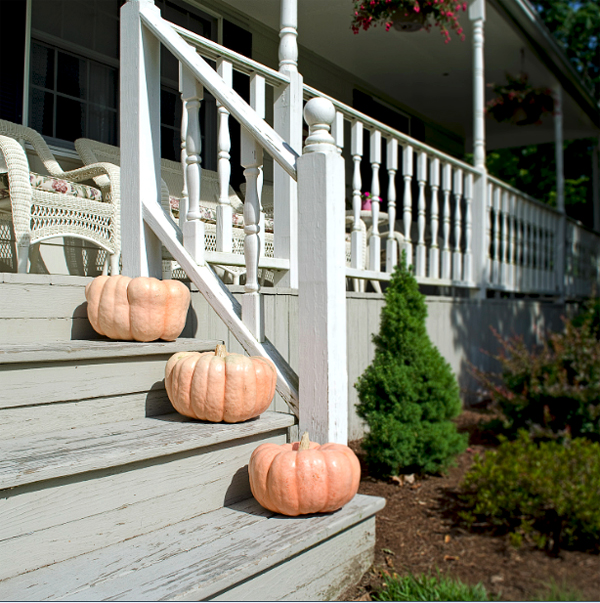 pink pumpkin decor home