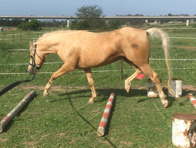 osteopathy_trot_poles_2